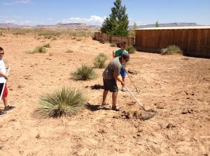 Watching the boys shovel manure.